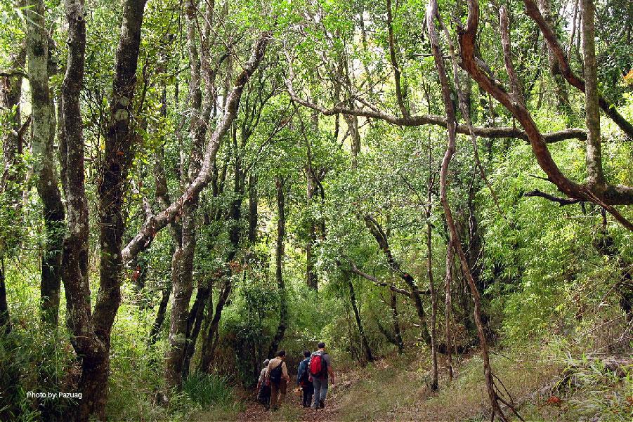 Árboles en el Parque Nacional Nonguén