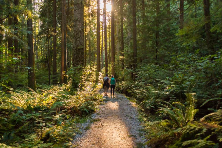 Una pareja paseando por el bosque en un día soleado