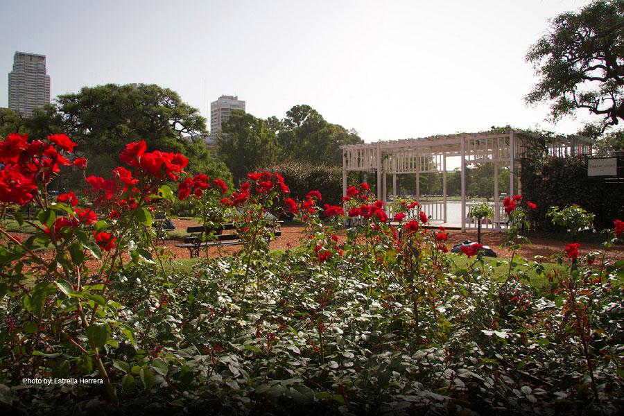 Flores en Rosedal de Palermo