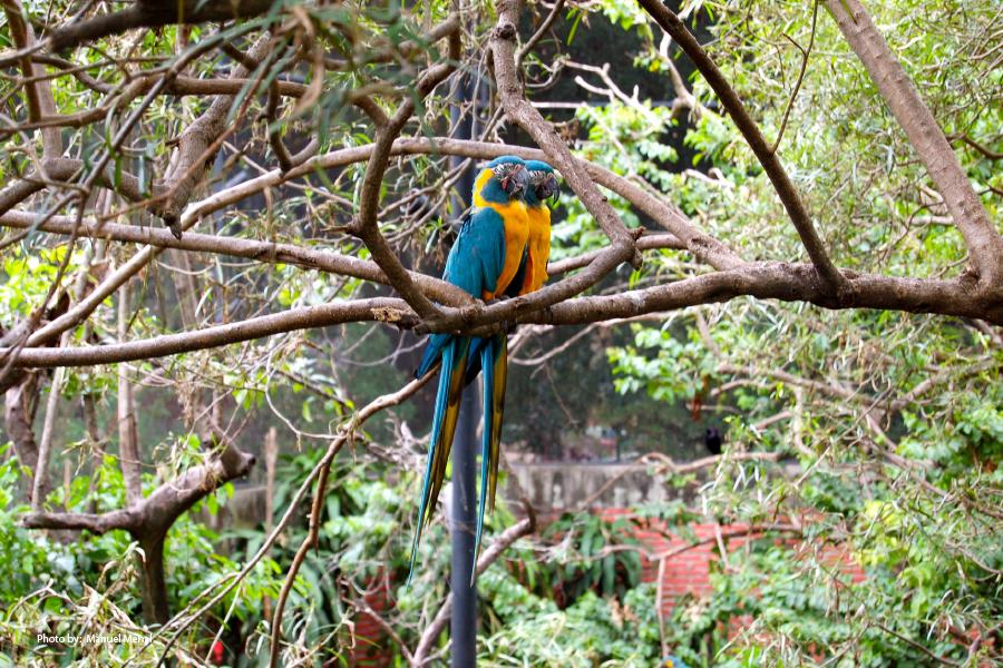 Loros en el Zoológico de Santa Cruz