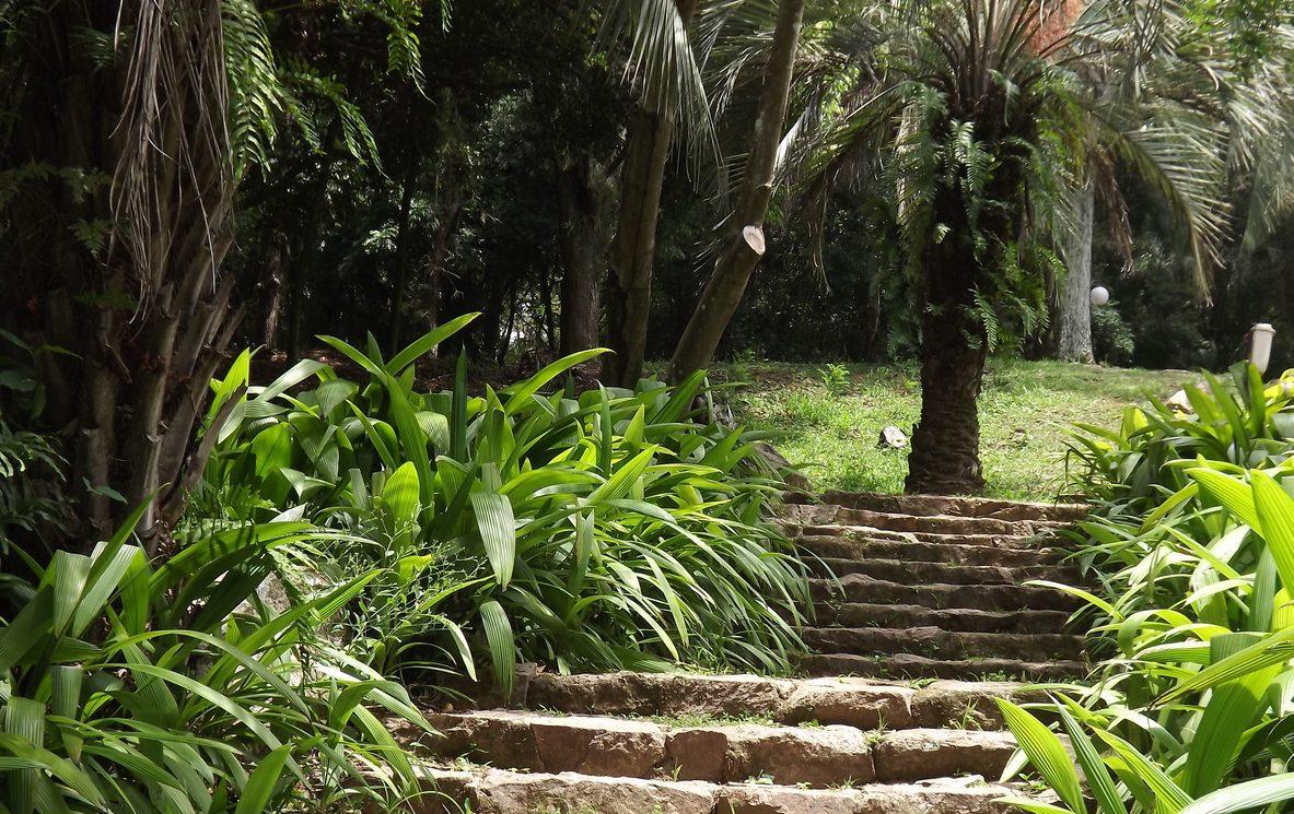 Plantas no Jardim Botânico de Porto Alegre