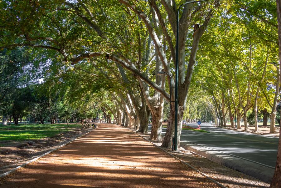 Camino del parque General San Martín para dar un paseo en Mendoza