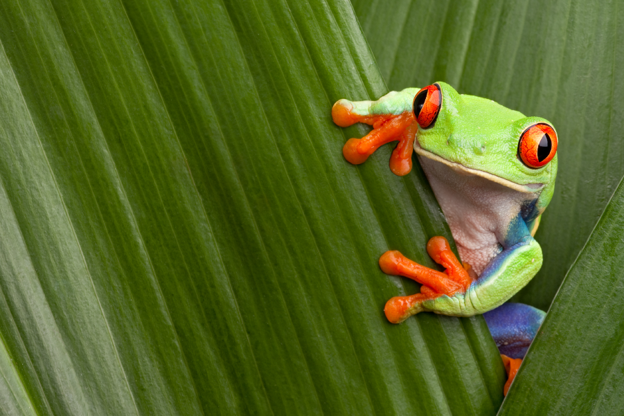 Una rana entre las hojas de una planta