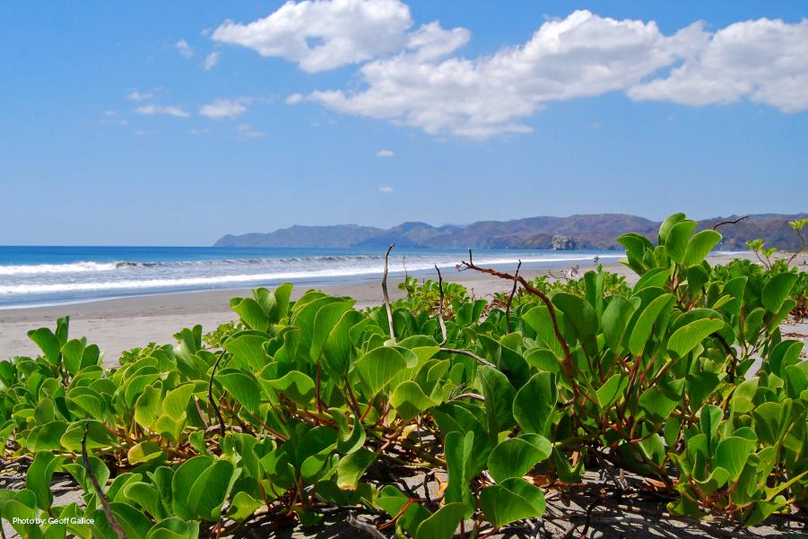 Vista hacia la costa del Parque Nacional Santa Rosa, en Guanacaste, Costa Rica