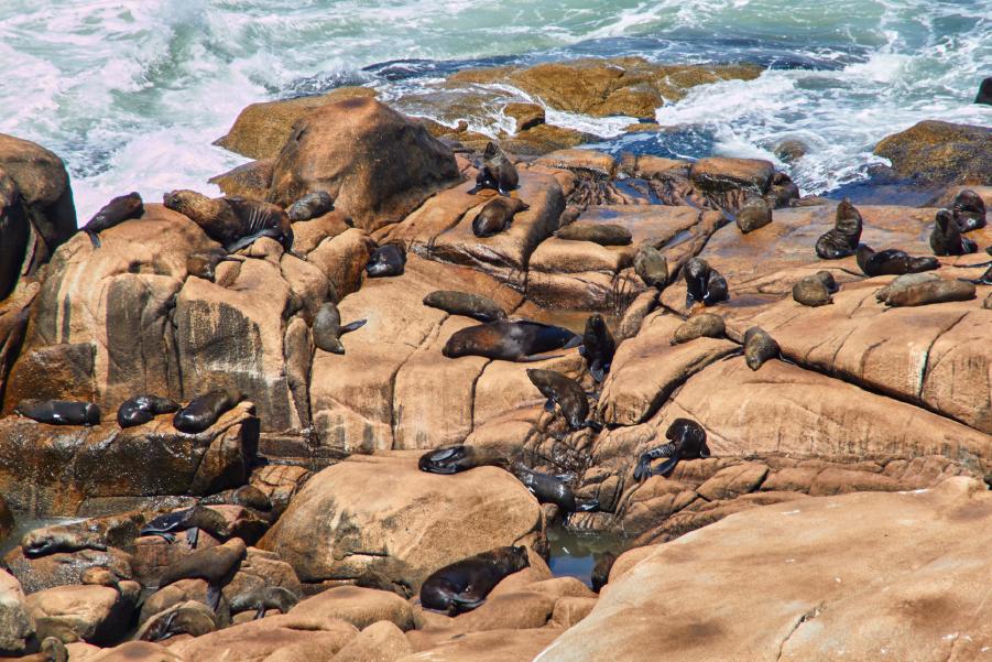 Lobos marinos sobre piedras en el Parque Nacional Cabo Polonio, en Uruguay