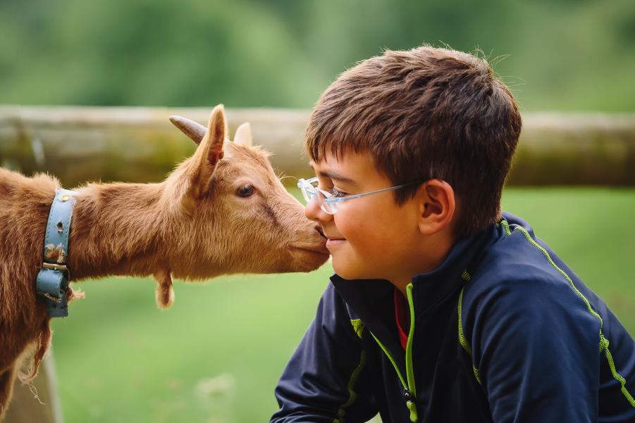 Niño jugando con una cabra en una granja de animales