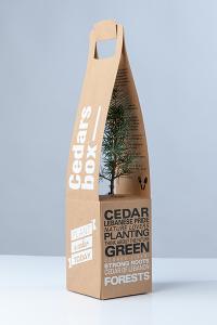 cedar-box-blog